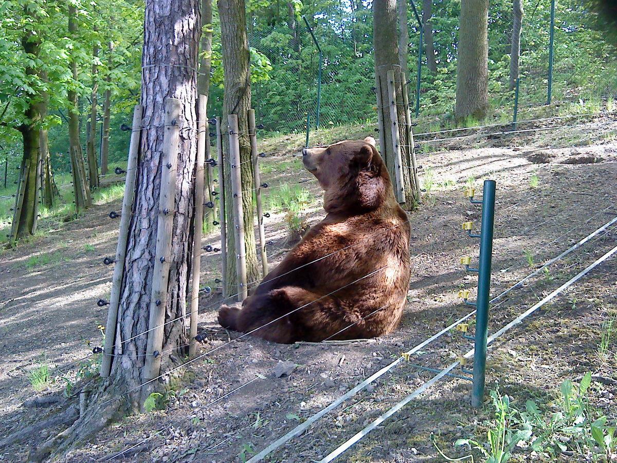 Read more about the article Berounští medvědi